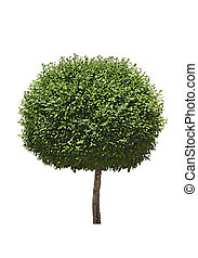 Isolated topiary tree - Green topiary tree isolated over...