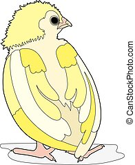 Big bird back - Vector illustration of a chick, EPS 8 file