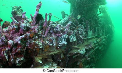 Red sea sponges in the wreckage of a shipwreck Amazing...
