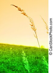 meadow in vibrant abstract colors showing summer or evening...