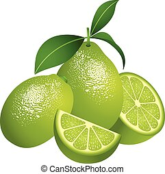 Juicy green citrus fruit - Scalable vectorial image...