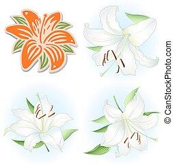 Orange & white lilies set