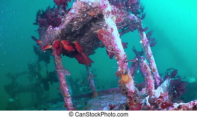 Red sea sponges in the wreckage of a shipwreck. Amazing...