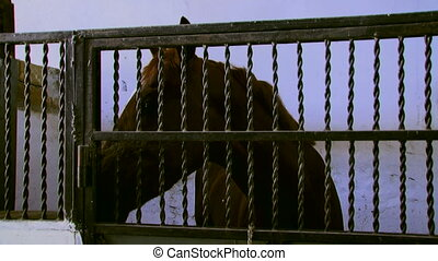 A horse standing in the stalls with iron bars Moving camera...