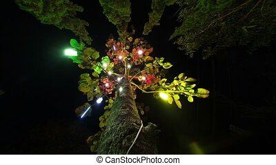 Tree ride timelapse in Pai Town at the night