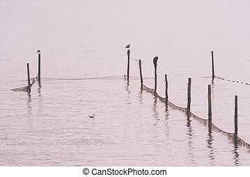 Northern Sea landscape: still water and birds on wooden...