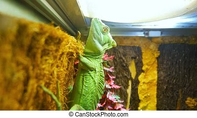 Green lizard on a terrarium wall