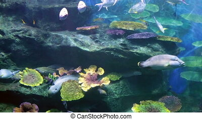 Fishes in corals. Underwater world. - Fishes in corals...