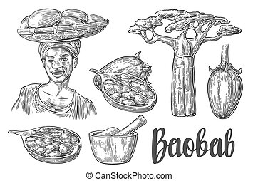 Baobab fruit, tree and seeds. Mortar and pestle. African woman carries a basket on her head. Vector vintage engraved illustration isolated on white background.