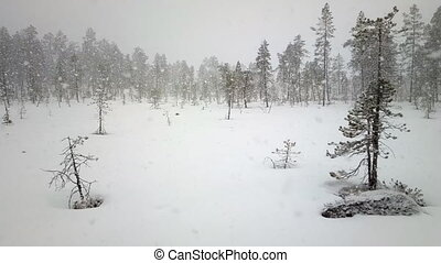 First snow 3. Dense big snow falls over forest - Dense big...