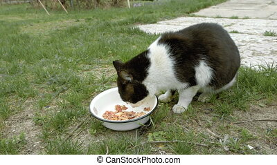 Cat eats meat outdoors on the green grass Country rural pet...