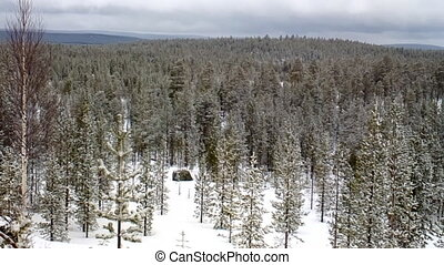 Snow-covered taiga of Lapland After recent snowfall -...