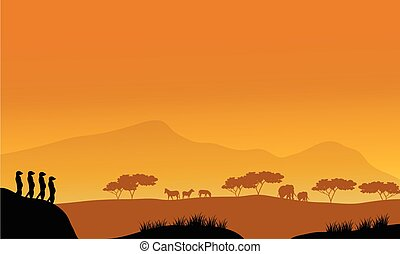 Beautiful meerkat silhouette at afternoon with orange...