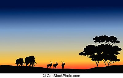Elephant and antelope silhouette at the sunset