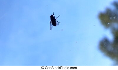The signs of spring 3. First fly crawling on window glass -...