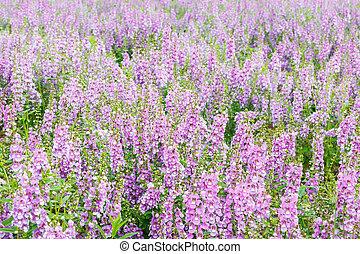 Purple delphinium. - Purple delphinium flowerbed in the...