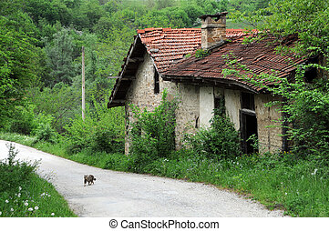 Abandoned Watermill and Kitten - Abandoned watermill and a...