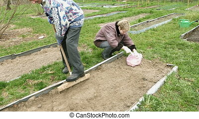 Elderly man and girl seed vegetables in the garden