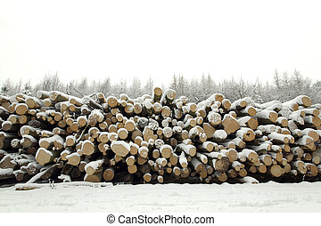 Snow covered log pile