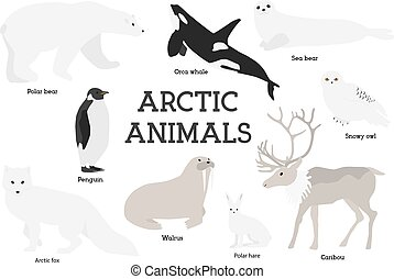 Arctic animals collection Set of flat minimal vector...