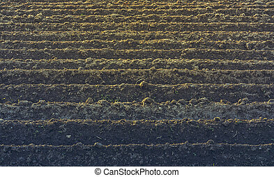 Furrows rows pattern