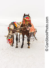 Horses and Winter Landscape - Standing on the snow, Local...