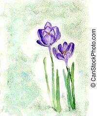 Crocus Flowers Painting - Spring crocus flowers with leaves,...