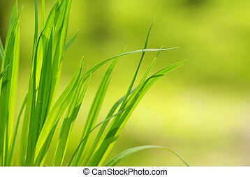 grass - Green grass isolated on green background