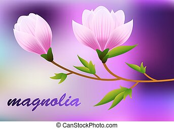 Spring magnolia background with blossom brunch of pink flowers. Vector