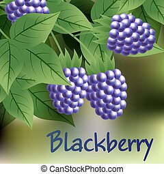 black, ripe, sweet blackberry hanging on a branch with green leaves. Vector