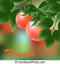 Red, juicy, ripe tomatoes growing on the green branch. Vector