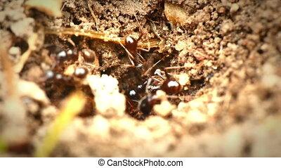 black ants in the nest 4k
