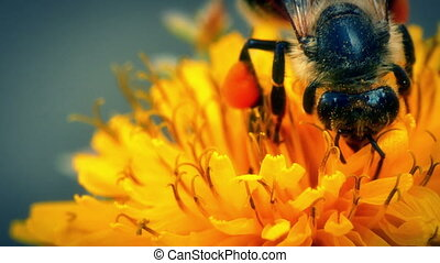 Bee on yellow flowers 4k