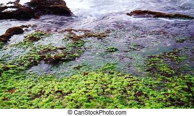 Land Sea Seaweed - Rocky land with reefs and seaweed washed...
