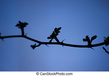 vine silhouette - a vine silhouetted against a blue sky