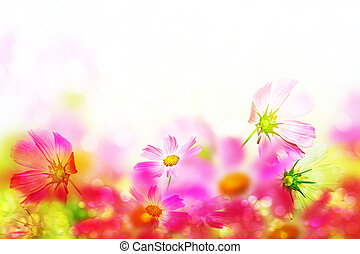 Pink and white cosmos flowers Floral background