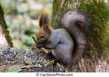 squirrel standing between ferns and leafs Portrait of a...