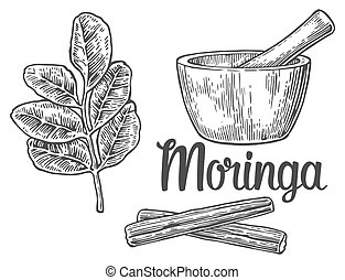 Moringa leaves and pod. Mortar and pestle. Vector vintage...