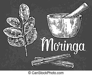 Moringa leaves and pod. Mortar and pestle. Vector vintage...