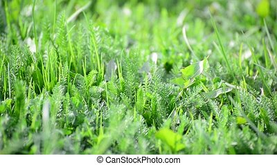 bright spring grass in wind - bright spring grass in the...