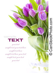 Pink tulips on white background with sample text