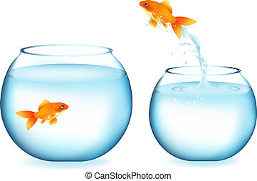 Goldfish Jumping To Other Goldfish - Golden Fish Jumping To...