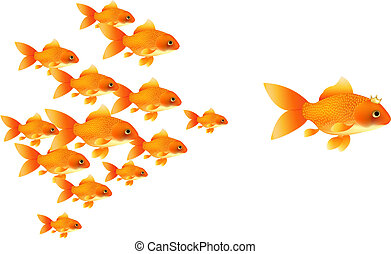 Goldfishes Follow Big Goldfish, Isolated On White