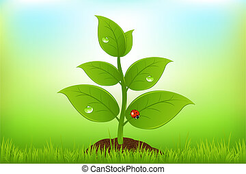 Green Sprout In Grass With Ladybug