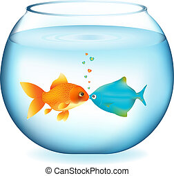 Kissing Fishes - Two Fishes Kissing In Aquarium, Isolated On...