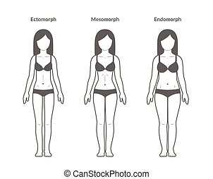 Female body types: Ectomorph, Mesomorph and Endomorph....