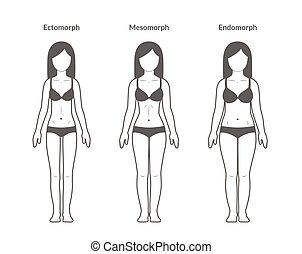 Female body types: Ectomorph, Mesomorph and Endomorph....