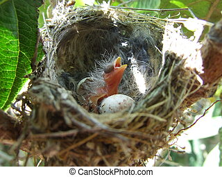 The birth of a bird. El nido pajaro - A bird observes...