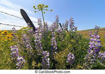 Wildflowers in Bloom at Columbia Hills State Park