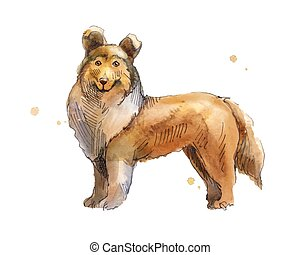 Shetland Sheepdog. Drawing by hand in watercolor. Sketch low...